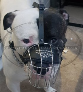 Basket American Bulldog Muzzle UK Best Seller