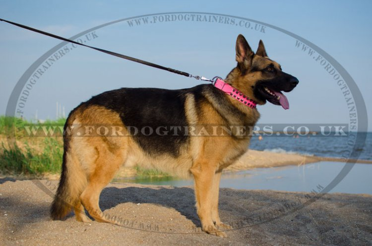 Bright Leather Beautiful German Shepherd Collars for Female Dogs