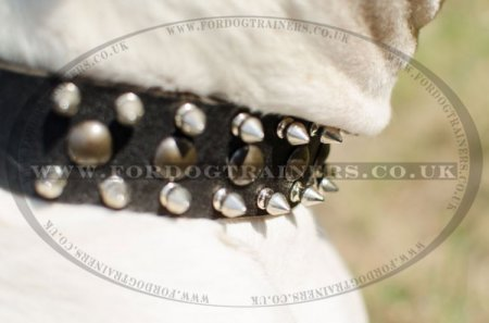 """Thorn Kick"" Leather Studded Dog Collar For American Bully"