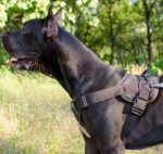 Great Dane Training Dog Harness | Strong Dog Harness
