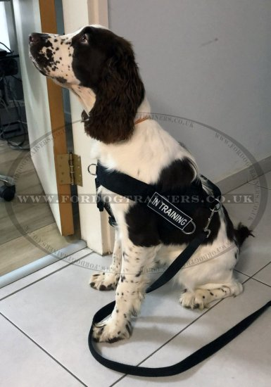 K9 Training Dog Harness | Non-Pull Dog Harness Best Price!