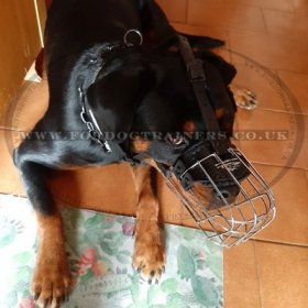 Rottweiler Basket Muzzle Size for Dogs with Broad Snout