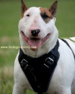 Comfortable Dog Harness for Bullterrier - UK Bestseller! Try Now