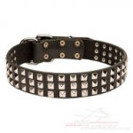 Stylish Dog Collar With Shiny Nickel Plates