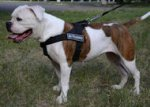 American Bulldog Harness Bestseller UK | No-Pull Dog Harness