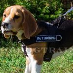 No Pull Harness for Beagle | Beagle Harness for Stop Dog Pulling