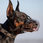 The Best Basket Muzzle for Doberman Pinscher and Long-Nosed Dogs