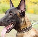 "Hand-riveted Caterpillar Dog Collar 1.5"" for Malinois Shepherd"