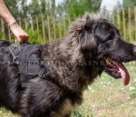 Towing Nylon Dog Harness with Handle for Caucasian Shepherd