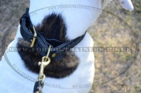 """VIP Class Doggy"" Best Dog Collar For American Bulldog With Braided Design"