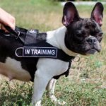 French Bulldog Harness for Stop Dog Pulling | Small Dog Harness