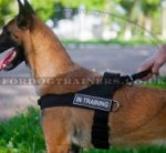 Belgium Shepherd Dog Harness for Training, Weight Pulling