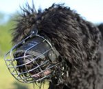 Best Dog Muzzle for Black Russian Terrier Size for Sale UK