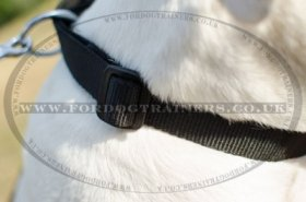 """Reliable Grip"" Strong Nylon Dog Collar For American Bulldog"