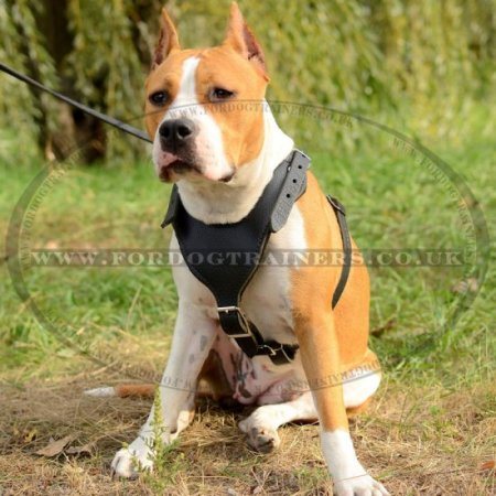 Buy V-Shaped Dog Harness | Perfect Fit Dog Harness - £78.59