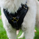 Husky Dogs Harnesses for Sale | Siberian Husky Dog Harness