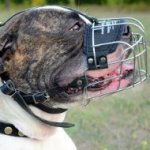 Buy Wire Basket Muzzle for American Bulldog of the Best Design