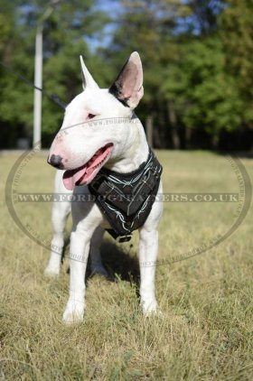 "English Bull Terrier Dog Training Harness ""Barbed Wire"" Design"