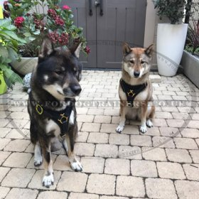 Husky Dog Harness | Leather Dog Harness with Brass Fitting