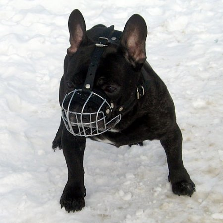 The Best French Bulldog Muzzle UK for Flat Nosed Dogs