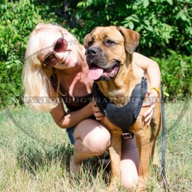 The Best Dog Harness for Cane Corso Comfy Walking
