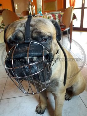 The Best Dog Muzzle for Bullmastiff Muzzle Size
