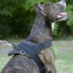 Sport / Walking Amstaff Harness with Handle UK Bestseller!