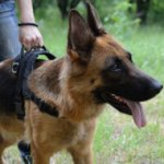 Best German Shepherd Harness with Handle for Multipurpose Use