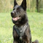 K9 Leather Dog Harness for German Shepherd UK Bestseller