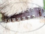 Unusual Dog Collars Sparkling Style | West Siberian Laika Collar