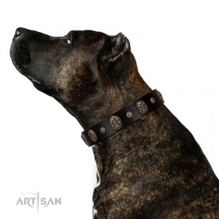 """Pirate's Spell"" FDT Artisan Stylish Black Leather Dog Collar With Studs"