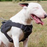 Nylon Harness for Bull Terrier | English Bull Terrier Harness