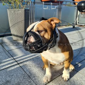 Soft Leather Muzzle for Bulldog Flat Snout, Perfectly Ventilated