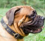 Royal Design of Dog Collar for Bullmastiff