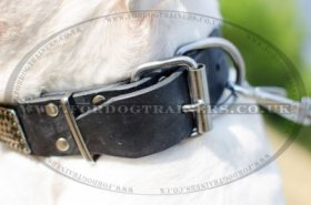 "Studded Dog Collar For American Bulldog ""Rococo Style"""
