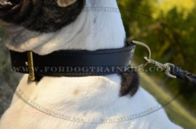 """Double-Layer"" Two Ply Leather Dog Collar For American Bulldog 1.8 Width"