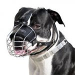 Padded Staffordshire Bull Terrier Muzzle with Perfect Airflow