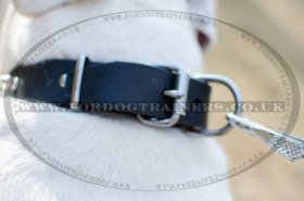 """Bow-Wow"" Exclusive Leather Dog Collar For American Bully With Spikes"