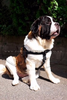 Get St Bernard Harness UK Bestseller to Stop Dog Pulling Leash