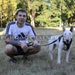 The Best Leash for Bull Terrier Walking UK Favorite!