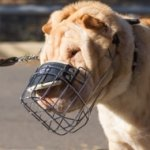 Bestseller Shar Pei Dog Muzzle That Allows Drinking and Eating Panting