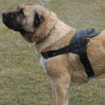 Dog Harness with Handle | Caucasian Shepherd Harness Best Choice