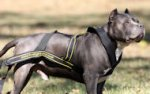 Weight Pulling Dog Harness for Pitbull | Pulling Dog Harness