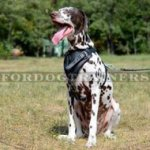 Padded Dog Harness for Dalmatian Training