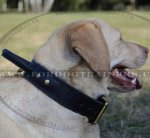Labrador Collar UK Bestseller | Dog Collar with Handle