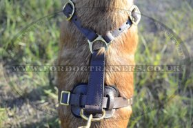 Belgian Malinois Leather Harness Soft and Strong Leather with Brass Fittings