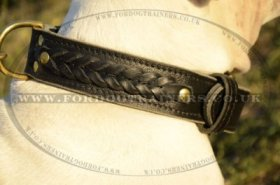 American Bulldog Collars UK Braided Leather Design