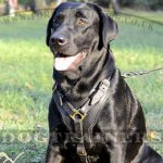 Padded Dog Harness for Labrador | Soft Dog Harness for Large Dog