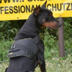 Doberman Dog Harness with Handle | Nylon Dog Harness Best UK