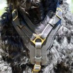 Russian Terrier UK Dog Harness | Dog Leather Harness